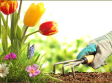 gardening_main